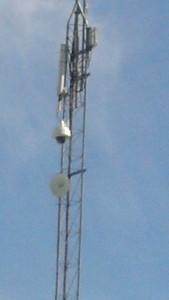 palms tower